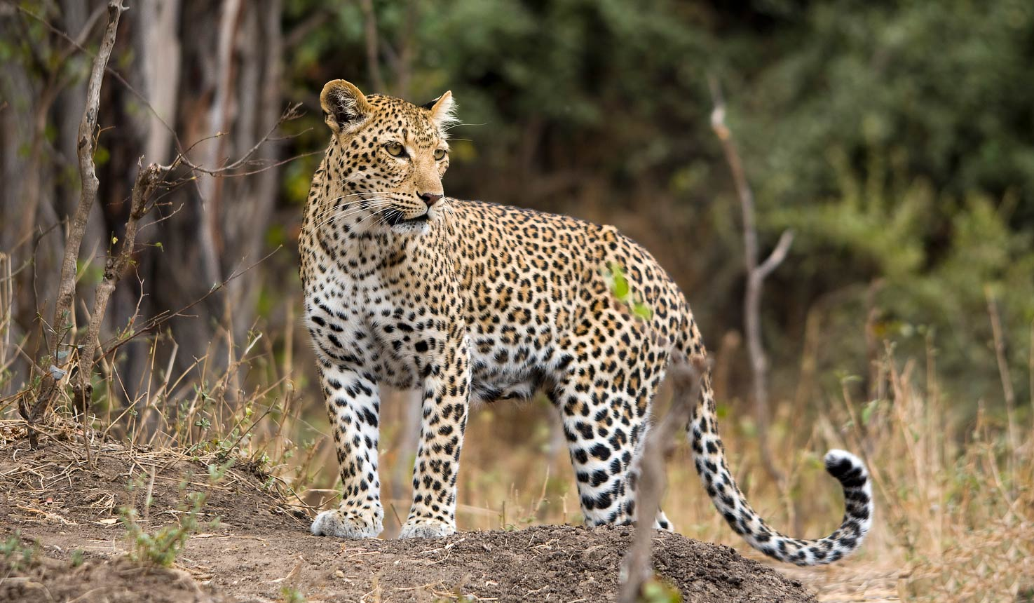 8ea78c1c1b The best locations for Leopards with Africa Travel Resource