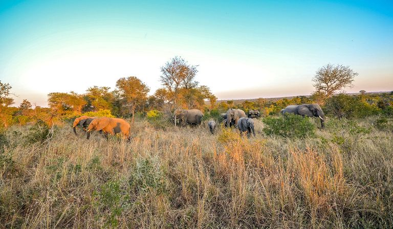 Find the best safari lodges in Thornybush Reserve with