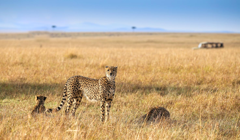 Naibor Camp, Vehicle Safari