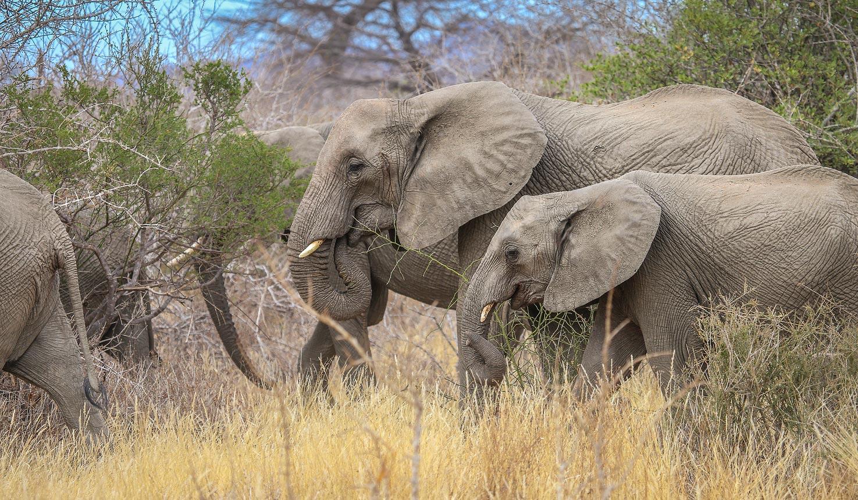 Ruaha Tanzania safari